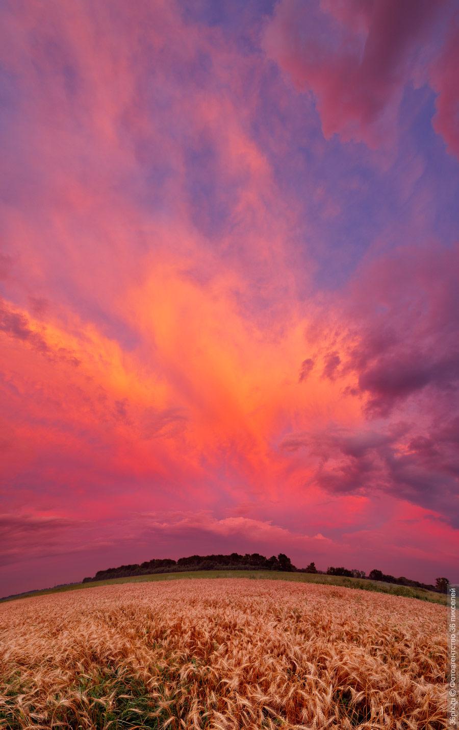 Розовый закат над полем в воронежской области